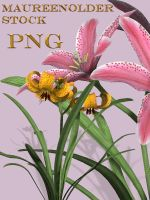 STOCK PNG 2 lillies by MaureenOlder