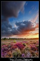 Natures Colour Fight by Wayne4585