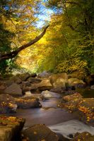 Glade Creek Autumn by LAlight
