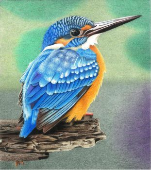Common Kingfisher by AlienOffspring