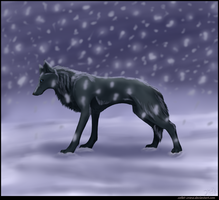 Wolf's Rain - Blue by CoLLet-Crane