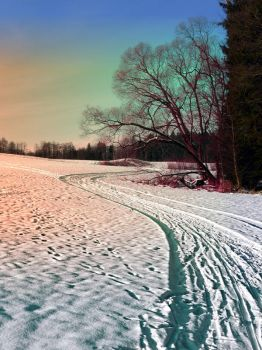 A snowy trail and some trees by patrickjobst