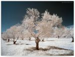 BlessedTree - infrared by LightSculpting