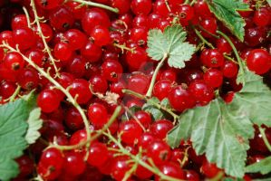 Currants by Laureina