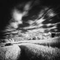 Wheatfield b+w infrared by MichiLauke