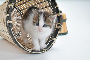 in a basket by JimmyDefiant