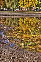 Autumn In A Puddle by johnwaymont