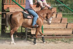 Quarter Horse Stock 58 by tragedyseen