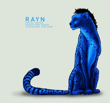Rayn by contravere