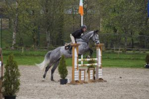 Grey Horse - Show Jumping Stock 8.18 by MagicLecktra