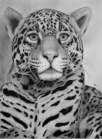 Nice Kitty IV. by Skoane