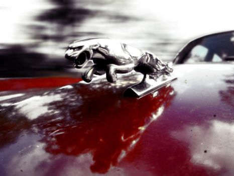 Jaguar by DNA-Photographe