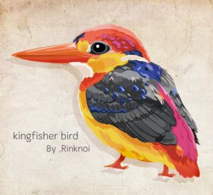 color's Kingfisher by rinknoi