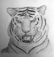 Tiger by sophicardia