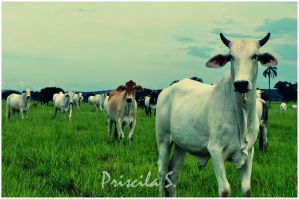 Ox and Cows by Decode-That