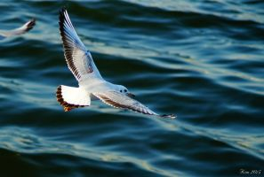 SEAGULL by kimpy23