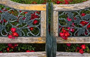Flowery Benches by muffet1