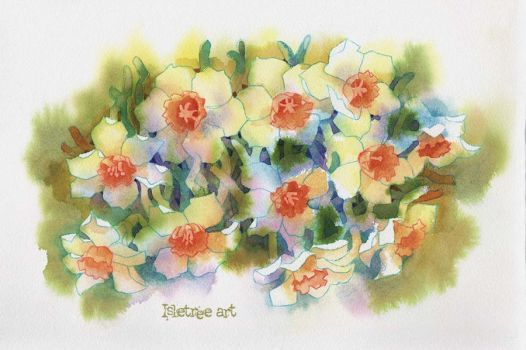 Narcissus flowers by isletree