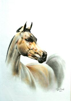 Arabian Horse by tactouc
