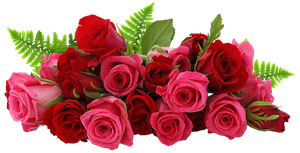 Red and Pink Roses PNG Picture by jabernoimi