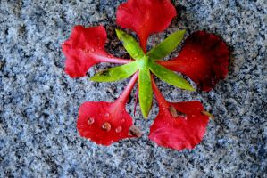 RED N GREEEN by anupamas