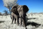 Infrared Animals - Forward Elephant by Okavanga