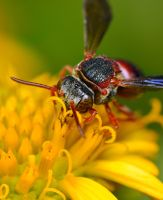 Mason Bee by Enkased