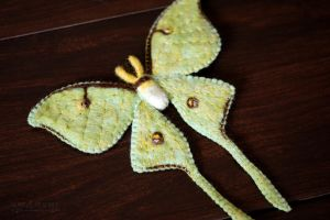Luna Moth 1 by quirkandbramble