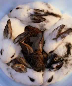 Bucket full of Bunnies by PatriciaVazquez