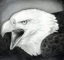 How to Draw a Bald Eagle by finalprodigy