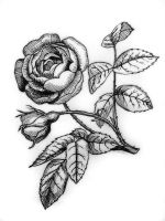 ink rose by hydrocyanic-acid