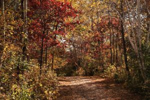 Fall Is Here by digitalpix4all