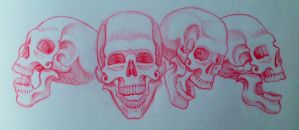 Skull Study 3 by harperugby