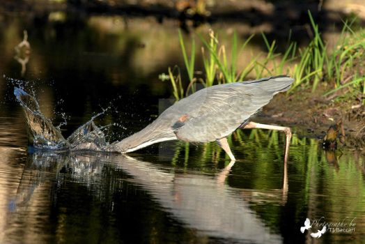 Going For The Fish by Photography-by-Image