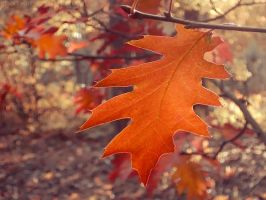 Red oak II by rosaarvensis