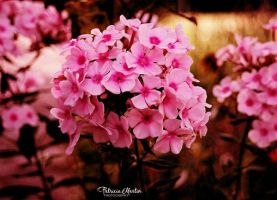 Flowers Of The Fall by t-R-i-S-h