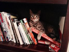 Bookshelf Kitty by ImmaEmmaKitteh