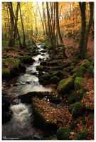 Autumn Flow by FlorentCourty