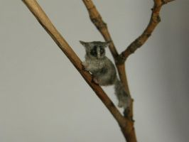 Bush Baby by AnyaStone