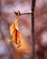 leaf by knowhopeinme