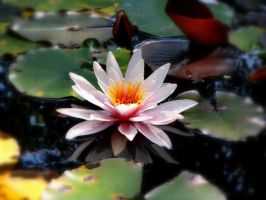 Lily Pad by Bethybops