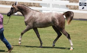 STOCK - Equitana 2013-254 by fillyrox