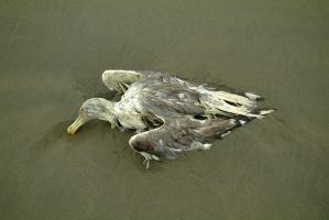 dead beach bird by fotophi