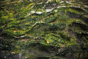 moss on rock 2 by LucieG-Stock