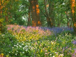 Blue bells by Fraped