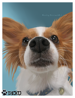 Papillon Portrait by Nestly