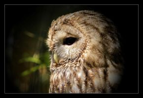 owl in her mind by Lilia73