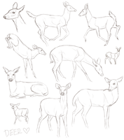 Deer Sketches by ForeverRunningFree