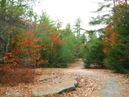 Massabesic Audubon Trails 5 by crazygardener