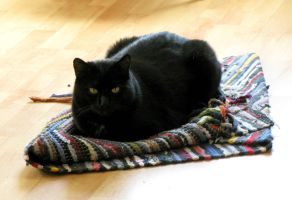 The flying carpet by CatsWire